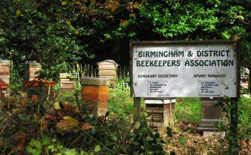 Honey Fun Day At Highbury Park