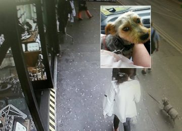 Yorkshire Terrier stolen in Kings Heath reunited with his owners